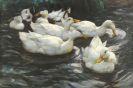 Alexander Koester - Sechs Enten im Wasser