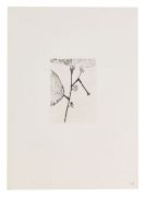 Louise Bourgeois - Homely Girl, A Life