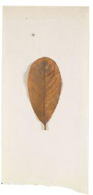 Joseph Beuys - Laurocerasus
