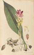 Theodor F. L. Nees von Esenbeck - Plantae Medicinales. 3 Bde.