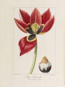 - Herbier de l'Amateur de Fleurs. 8 Bde.