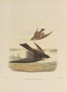 Richard Bowdler Sharpe - Hirundinidae