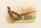 William Beebe - A monograph of the pheasants. 4 Bde.