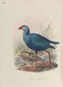 Henry Eeles Dresser - Birds of Europe. 9 Bde.