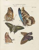 Johann Heinrich Sulzer - Geschichte der Insecten