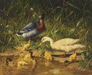 Carl Jutz d. Ä. - Enten mit Jungen am Wasser