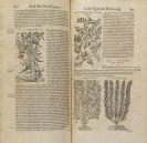 Pietro Andrea Mattioli - Opera. 1598