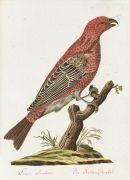 Joachim J. Nepomuk Spalowsky - Beytrag zur Naturgeschichte der Vögel. 4 Bde. 1790-92.