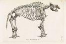 Georges Cuvier - Recherches sur les ossemens fossiles. 7 Bde.