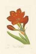 Pancrace Bessa - Flore des jardiniers, 4 Bde. in 2.
