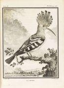 Georges Louis Lerclerc Buffon - Histoire naturelle des oiseaux. 9 Bde.