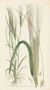 Thomas Martyn - Flora Rustica. 4 Bde.
