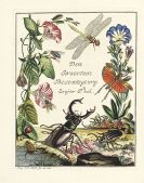 August Johann Rösel von Rosenhof - Insecten-Belustigung, 4 Bde., dazu Kleemann, Beyträge zur Naturgeschichte, 2 Bde. in 1, zusammen 5 Bde.