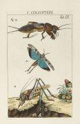 Johann Heinrich Sulzer - Die Kennzeichen der Insekten, 2 Bde.