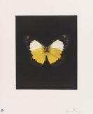 Hirst, Damien - Butterfly Etching Portfolio (Tribulation, Eternal Rest, Prosperity, Emerge, Regeneration, Renewal, Fate, Reveal, Spirit, Hope, Providence, Life)