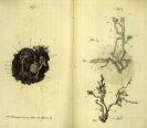 - Journal der ausländischen medizinisch-chirurgischen Literatur