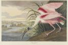 John James Audubon - The Birds of America, 2 Bde.