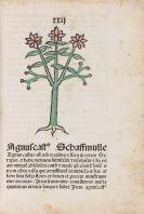 Herbarius Pataviae - Herbarius Pataviae