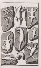 Johann Bartholomöus Adam Beringer - Lithographiae Wirceburgensis