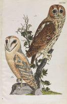 Naumann, Johann Friedrich - Naumanns Land u. Wasservögel