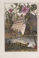 Augustin Johann Rösel von Rosenhof - Naturgeschichte der Froesche Deutschlands