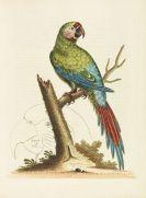 Edwards, George - Histoire naturelle d'oiseaux. 4 Bände - Dabei: Glanures d'histoire naturelle. 3 Bände