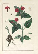 Nicolas Francois Regnault - La botanique mise à la portée. 3 Bände