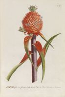 Christoph Jakob Trew - Plantae selectae