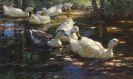 Alexander Koester - Sieben Enten im schattigen Waldteich