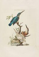 Nozeman, Cornelius - Nederlandsche vogelen. 5 Teile