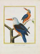 Buffon, Georges Louis Leclerc - Histoire naturelle des oiseaux. 3 Kassetten